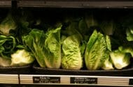 Lettuce in Stores May Be Contaminated