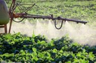 Pesticide Use Link to Parkinson's