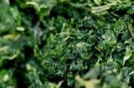 Sanitary conditions scrutinized in spinach-borne E. coli outbreak