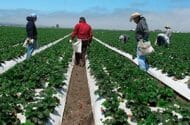 Officials comb Salinas farms