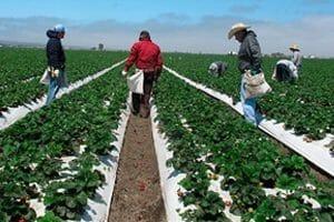 california farms E. Coli Probe