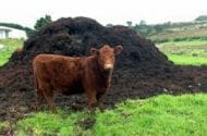 Officials test cattle manure for direct link to bacteria in spinach