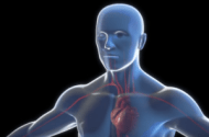 Medtronic Recalls Heart Device Loading System Due to Particulates