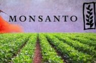 Monsanto Seeks to Block Carcinogenic Designation for Roundup