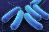 E. Coli Prevention Research Gets Funding from USDA