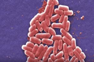 Salmonella & E. Coli Food Poisoning