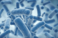 E. Coli Superbug Plagues England. Could United States be Next?