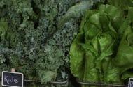 E. Coli Scares Prompt Leafy Green Safety Precautions in Arizona