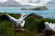 Antibiotic Resistant E. Coli Found in Arctic Birds