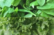 E. Coli Outbreak from Fresh Spinach Has USDA Mulling New Leafy Green Regulations