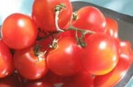 Salmonella From Raw Tomatoes May Be Responsible for Outbreaks in 9 States