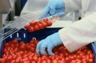 Salmonella Tomatoes Now Blamed for 552 Illnesses