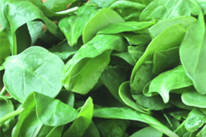 Tainted Spinach