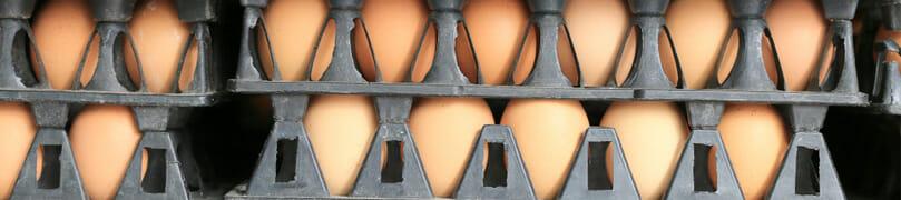 Farm food safety violations