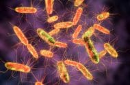 Lawsuit Filed After Ground Beef Salmonella Epidemic