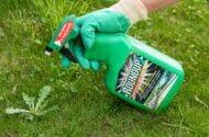 Bayer Will Defend Roundup/Glyphosate Weed Killer