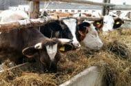 Colorado Premium Food Beef Recall
