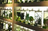 Major Retailers Accused of Selling Fraudulent Herbal Supplements