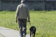 Older Man Walking Dog Hit by Car Dies